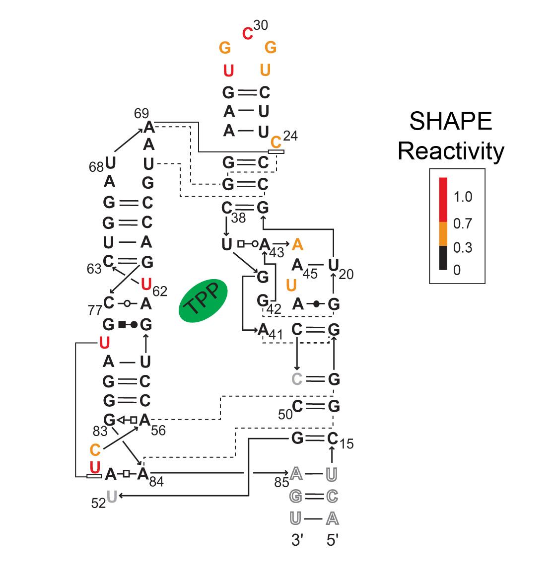 art25-YR-SHAPE Fig3